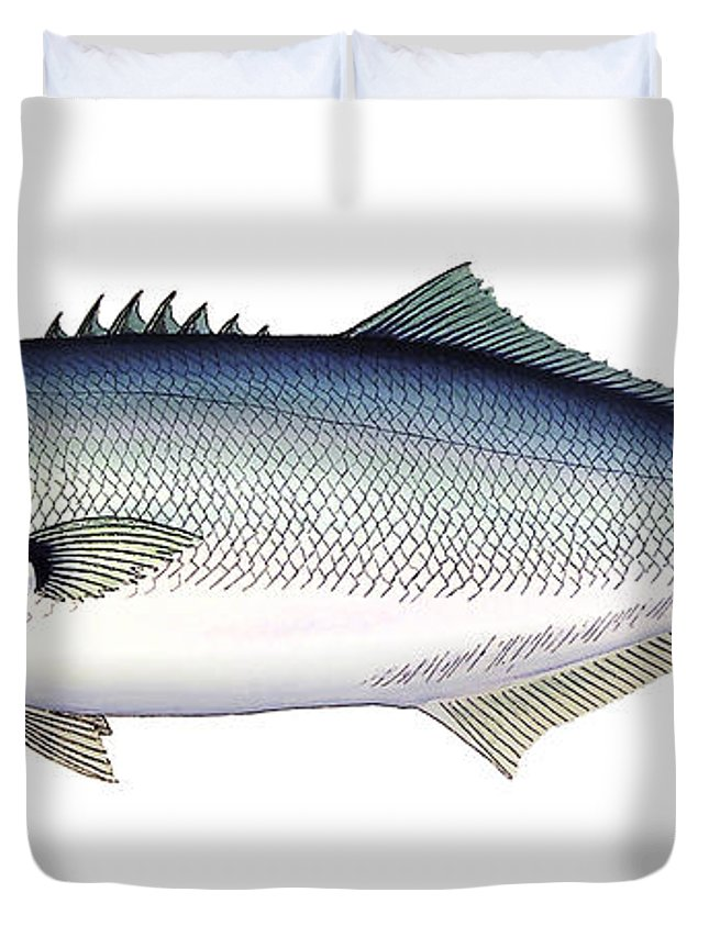Charles Duvet Cover featuring the painting Bluefish by Charles Harden