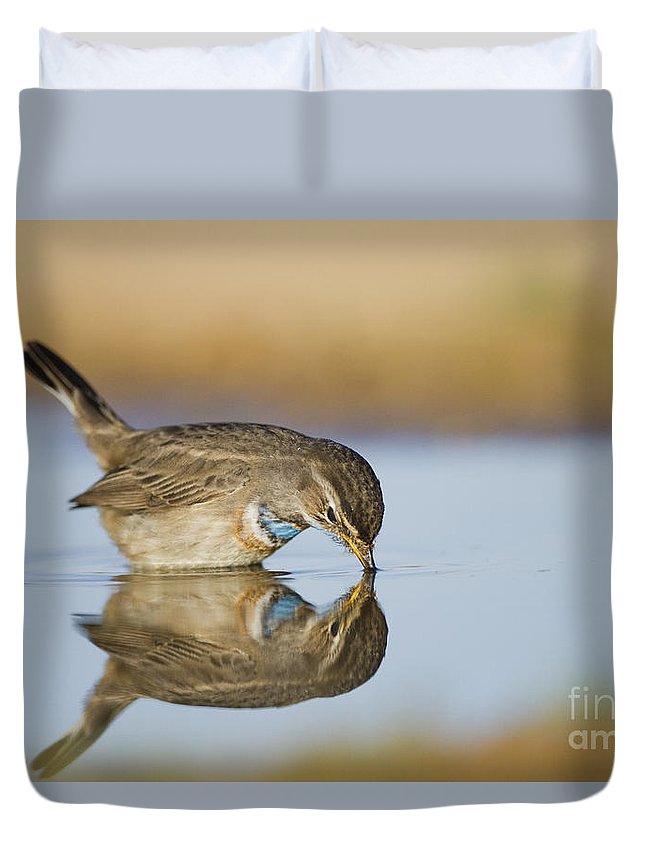 Bluethroat Duvet Cover featuring the photograph Bluethroat by Eyal Bartov