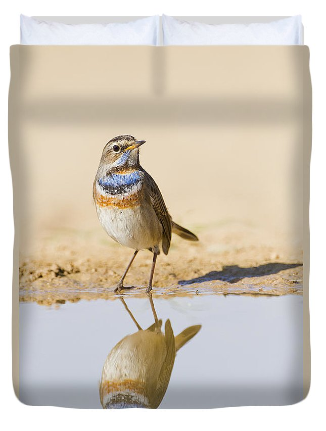 Bluethroat Duvet Cover featuring the photograph Bluethroat Luscinia Svecica by Eyal Bartov