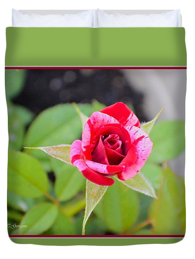 Rose Duvet Cover featuring the photograph Blushing Rose by Sonali Gangane
