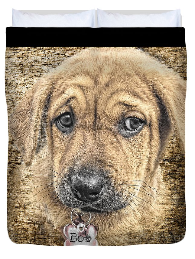 Bloodhound Duvet Cover featuring the photograph Bob by Lori Frostad