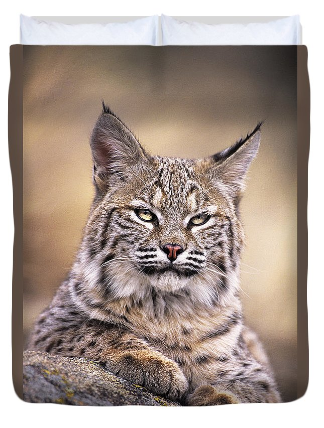 Bobcat Duvet Cover featuring the photograph Bobcat Cub Portrait Montana Wildlife by Dave Welling