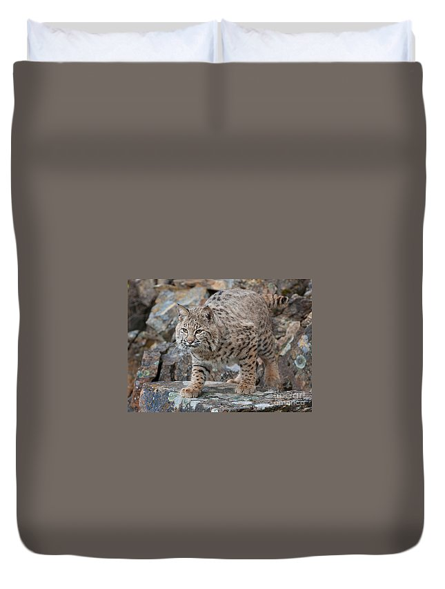 Bobcat Duvet Cover featuring the photograph Bobcat On Rock by Jerry Fornarotto