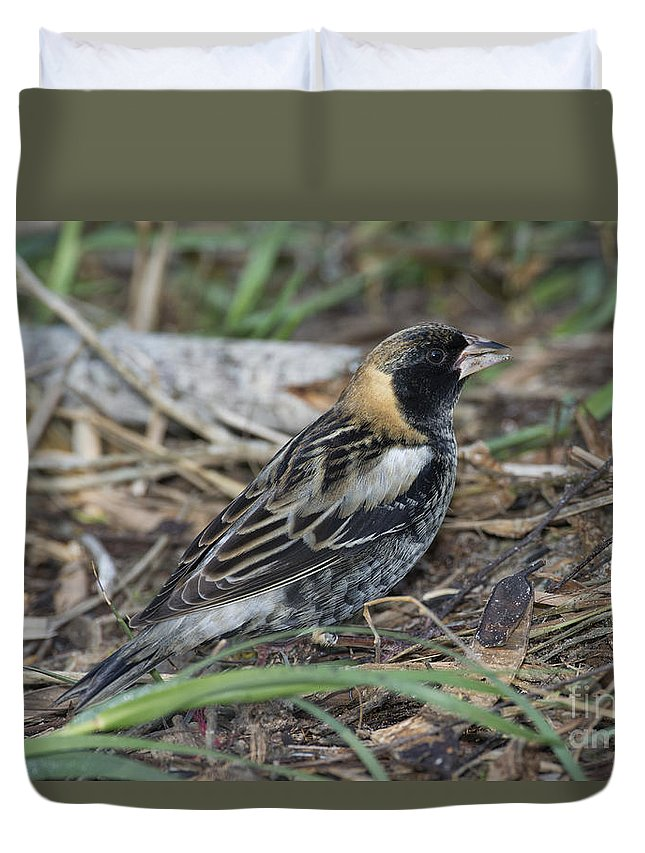 Bobolink Duvet Cover featuring the photograph Bobolink Feeding by Anthony Mercieca