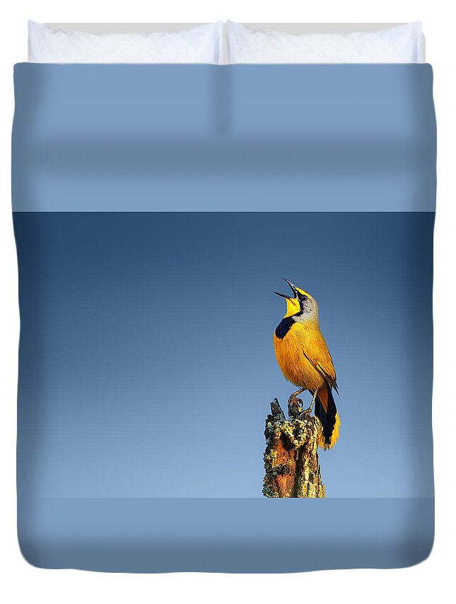 Bokmakierie Duvet Cover featuring the photograph Bokmakierie Bird Calling by Johan Swanepoel