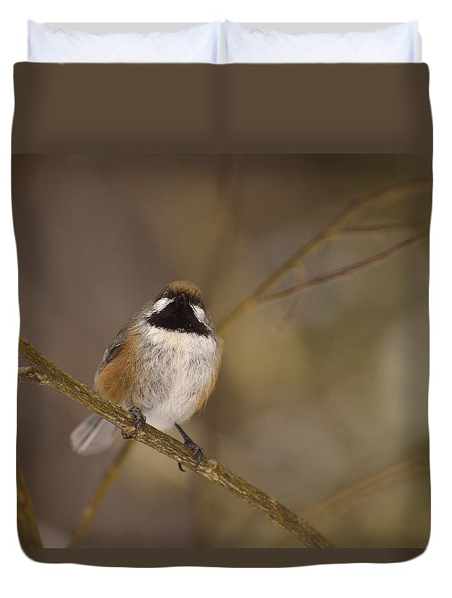 Boreal Chickadee Duvet Cover featuring the photograph Bonding Boreal by Joshua McCullough
