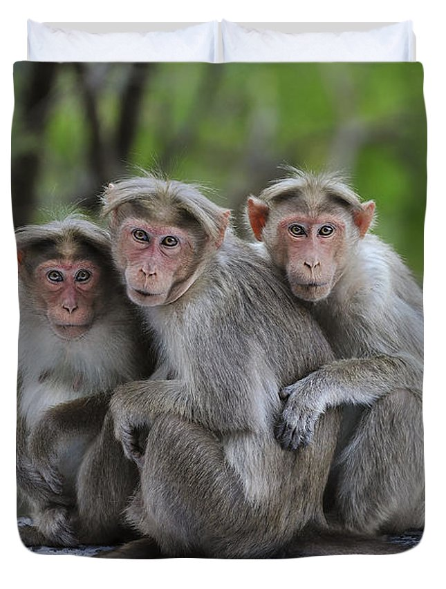 Thomas Marent Duvet Cover featuring the photograph Bonnet Macaque Trio Huddling India by Thomas Marent