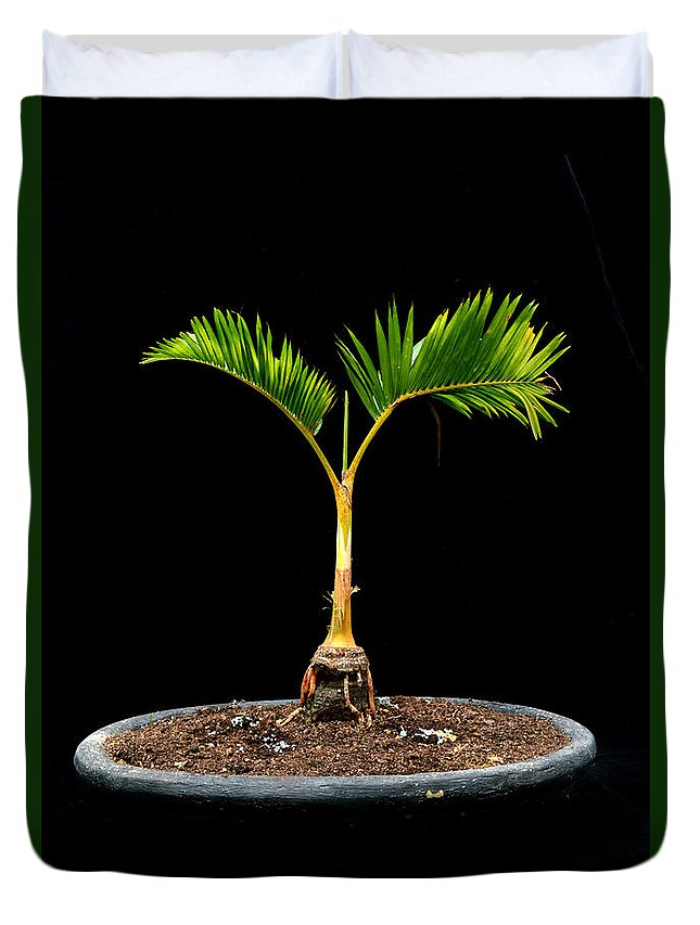 Bonsai Palm Tree Duvet Cover For Sale By Antoni Halim