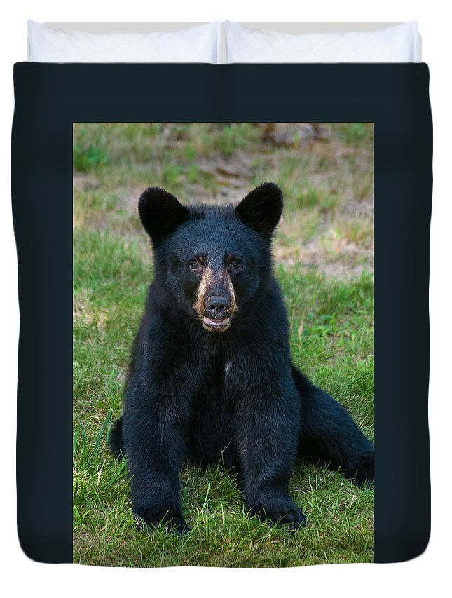 Black Bear Duvet Cover featuring the photograph Boo-boo The Little Black Bear Cub by Brenda Jacobs