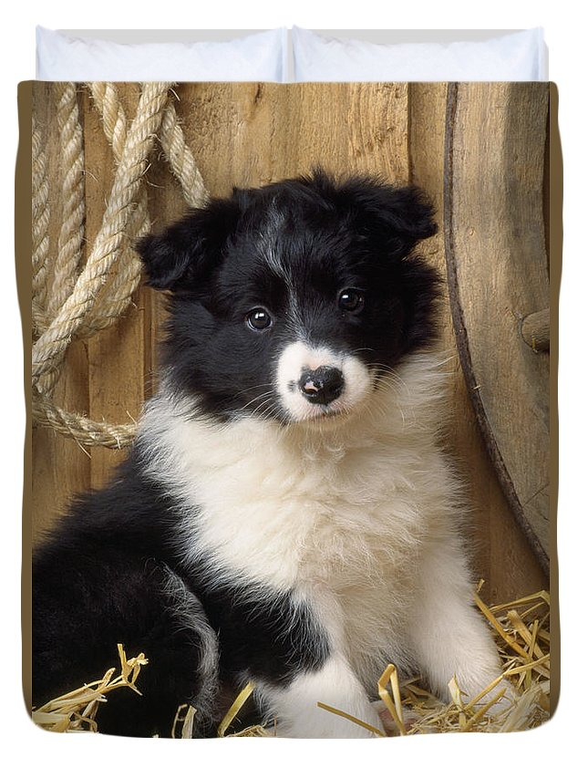 Border Collie Puppy Dog Duvet Cover For Sale By John Daniels