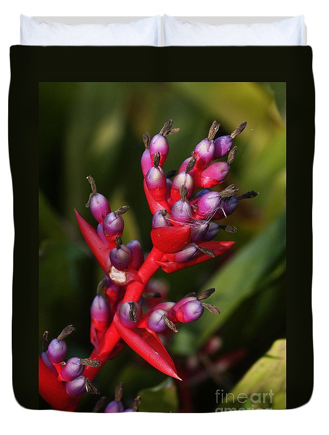 Nature Duvet Cover featuring the photograph botanical garden in Costa Rica 2 by Rudi Prott