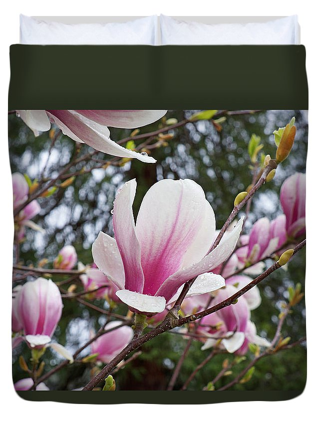 Botanical Tree Pink White Magnolia Flowers Duvet Cover For Sale By