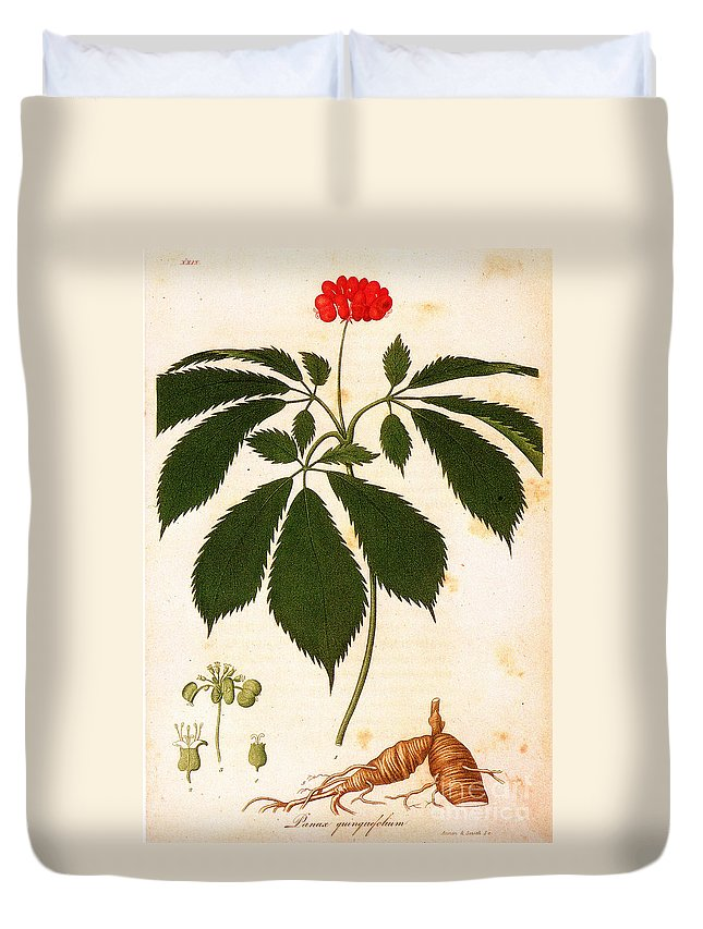1810s Duvet Cover featuring the photograph Botany: Ginseng by Granger
