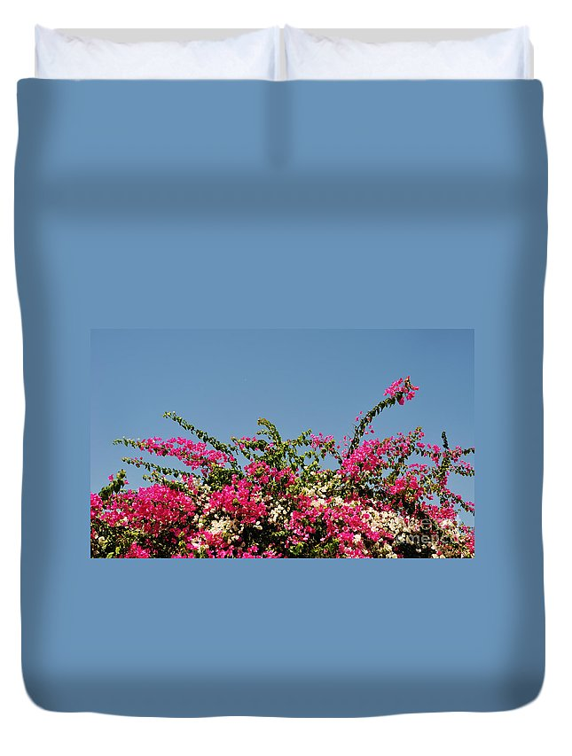 Bouganvilla Duvet Cover featuring the photograph Bougainvillea Flowers by Luis Alvarenga