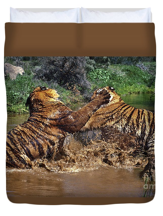 Bengal Tigers Duvet Cover featuring the photograph Boxing Bengal Tigers Wildlife Rescue by Dave Welling