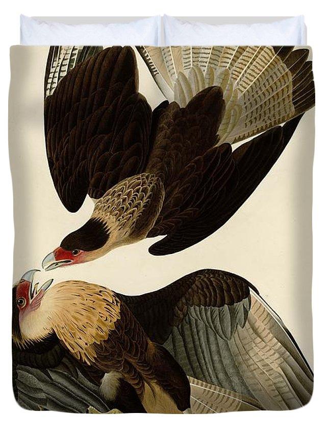 John James Audubon Duvet Cover featuring the painting Brasilian Caracara Eagle by Celestial Images