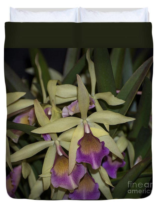 Green Orchid Duvet Cover featuring the photograph Brassocattleya Paulae  4823 by Terri Winkler