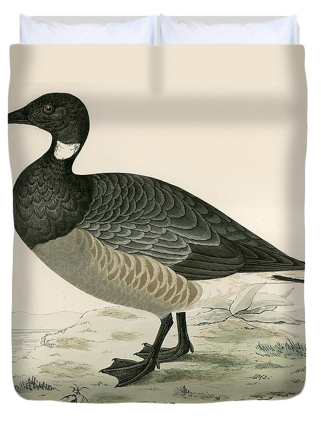 Birds Duvet Cover featuring the photograph Brent Goose by Beverley R. Morris