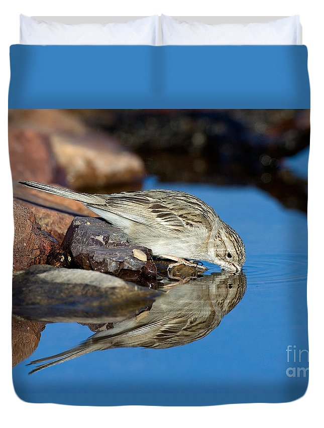 Fauna Duvet Cover featuring the photograph Brewers Sparrow At Waterhole by Anthony Mercieca