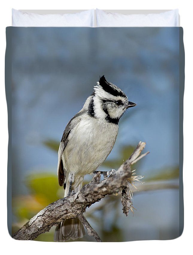 Bridled Titmouse Duvet Cover featuring the photograph Bridled Titmouse by Anthony Mercieca