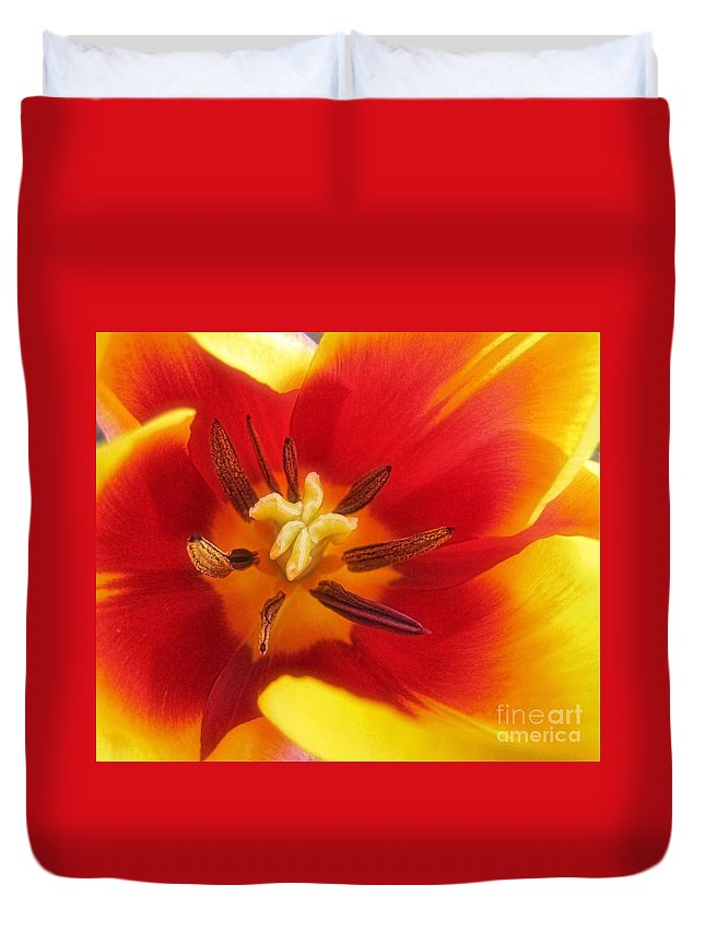 Tulip Duvet Cover featuring the photograph Bright And Sunny by Peggy Hughes