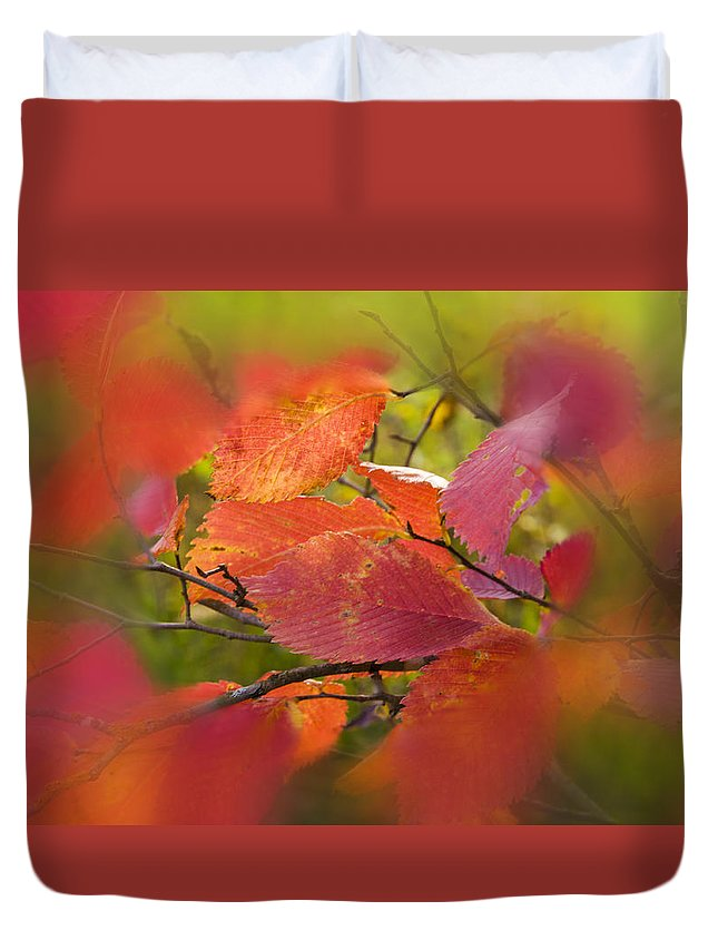 Autumn Leaves.tree Duvet Cover featuring the photograph Bright Autumn Leaves by  larisa Fedotova