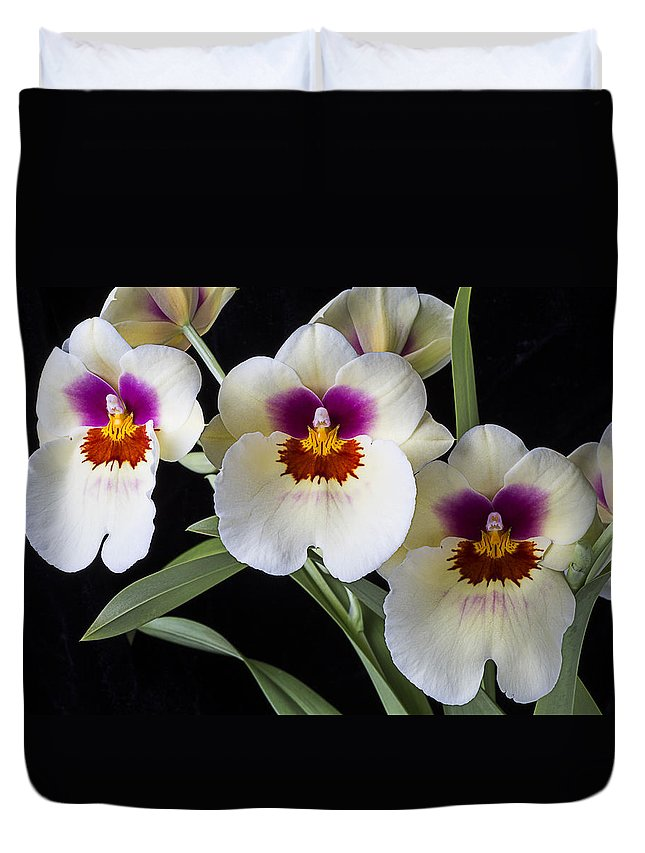 Row Duvet Cover featuring the photograph Bright Miltonia Orchids by Garry Gay