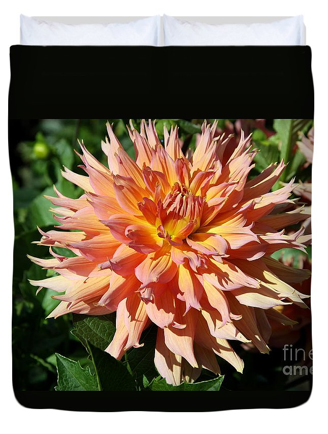Dahlia Duvet Cover featuring the photograph Bright Peachy Star by Christiane Schulze Art And Photography