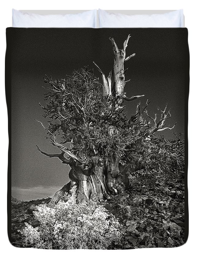 North America Duvet Cover featuring the photograph Bristlecone And Wildflowers In Black And White by Dave Welling