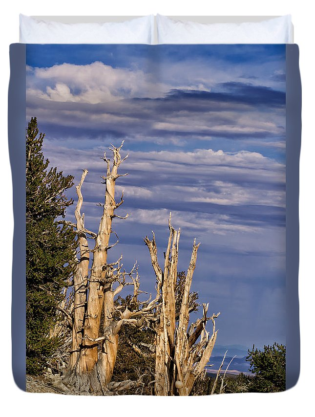 Bristlecone Duvet Cover featuring the photograph Bristlecone Warriors by Kathleen Bishop