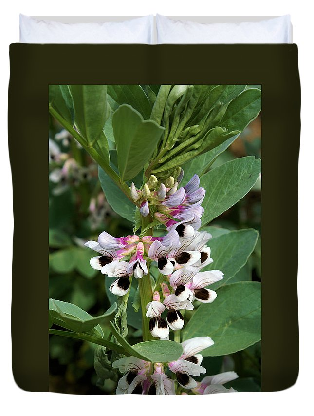 Plant Duvet Cover featuring the photograph Broad Beans by Ron Harpham