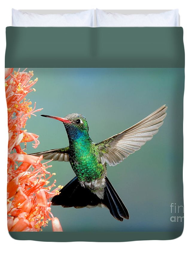 Fauna Duvet Cover featuring the photograph Broad-billed Hummingbird At Ocotillo by Anthony Mercieca