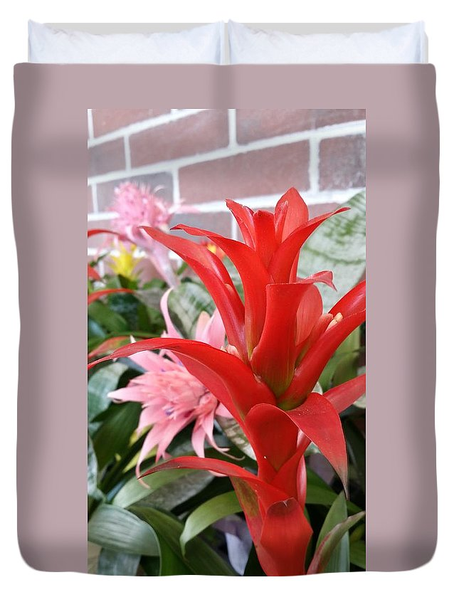 Still Life Duvet Cover featuring the photograph Bromeliad Red Pink Brick by Mark Victors