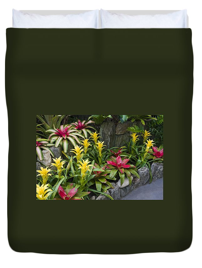 Guzmania Ligulata Bromeliad Tropical Plants Duvet Cover featuring the photograph Bromeliads by Sally Weigand