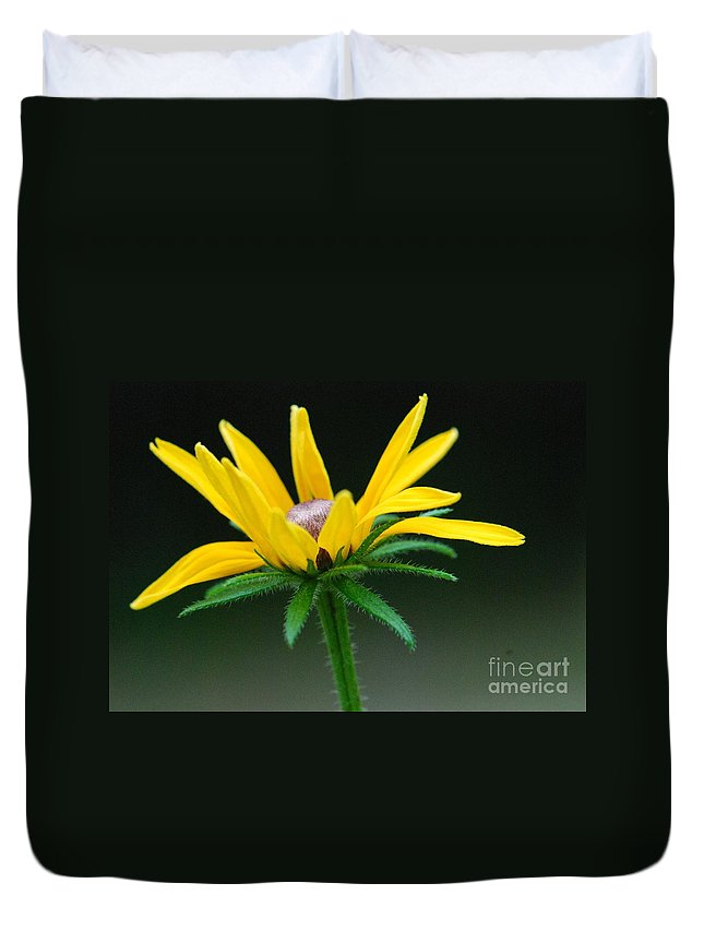 Yellow Flower Duvet Cover featuring the photograph Brown-eyed Susan by Amy Porter
