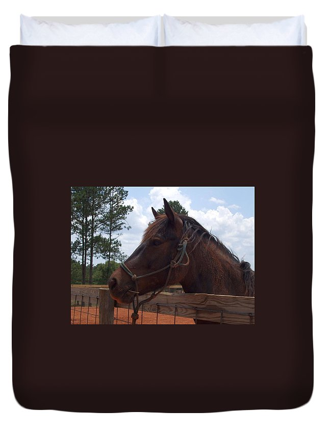 Horse Duvet Cover featuring the photograph Brown Horse by Lisa Wormell