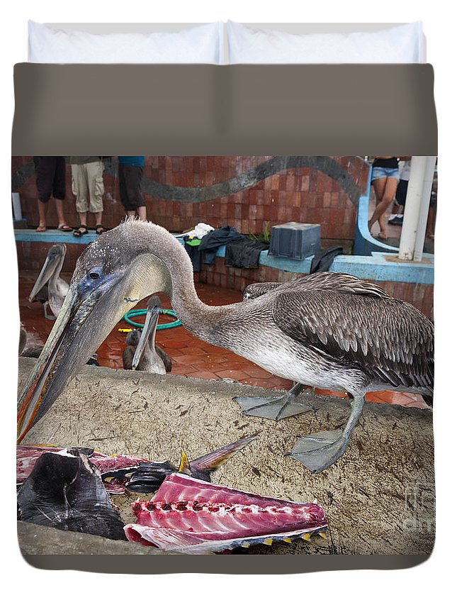Brown Pelican Duvet Cover featuring the photograph Brown Pelican At The Fish Market by Jason O Watson