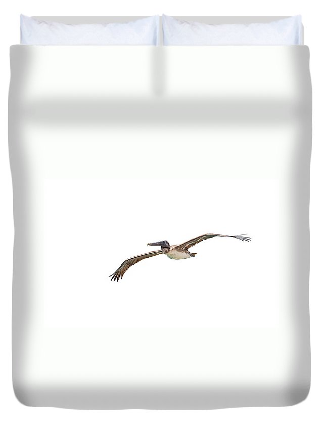 Birds Duvet Cover featuring the photograph Brown Pelican On White by John M Bailey