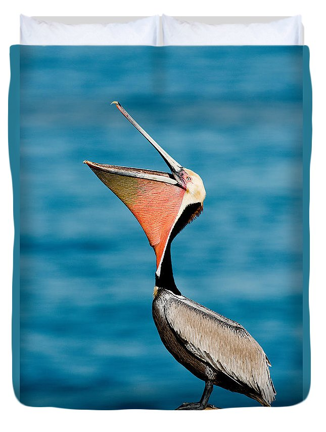 California Brown Pelican Duvet Cover featuring the photograph Brown Pelican Showing Pouch by Anthony Mercieca