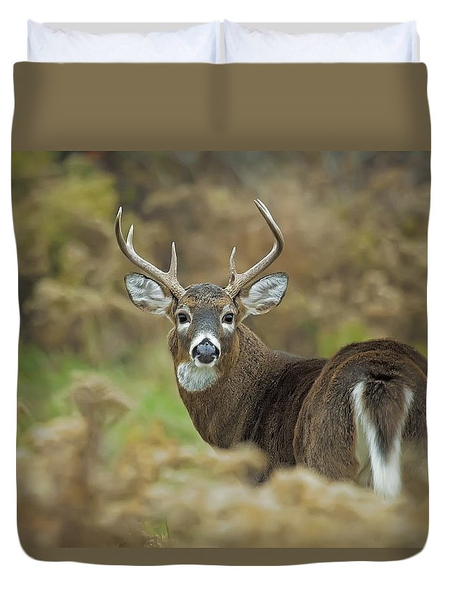 White-tailed Deer Duvet Cover featuring the photograph Buck Fever by John Vose