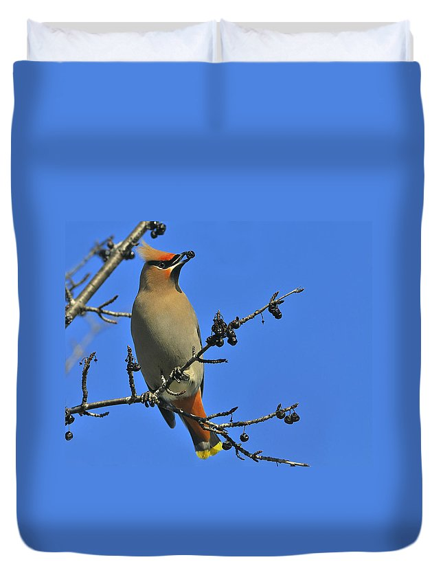 Bohemian Waxwing Duvet Cover featuring the photograph Buckthorn Breakfast by Tony Beck