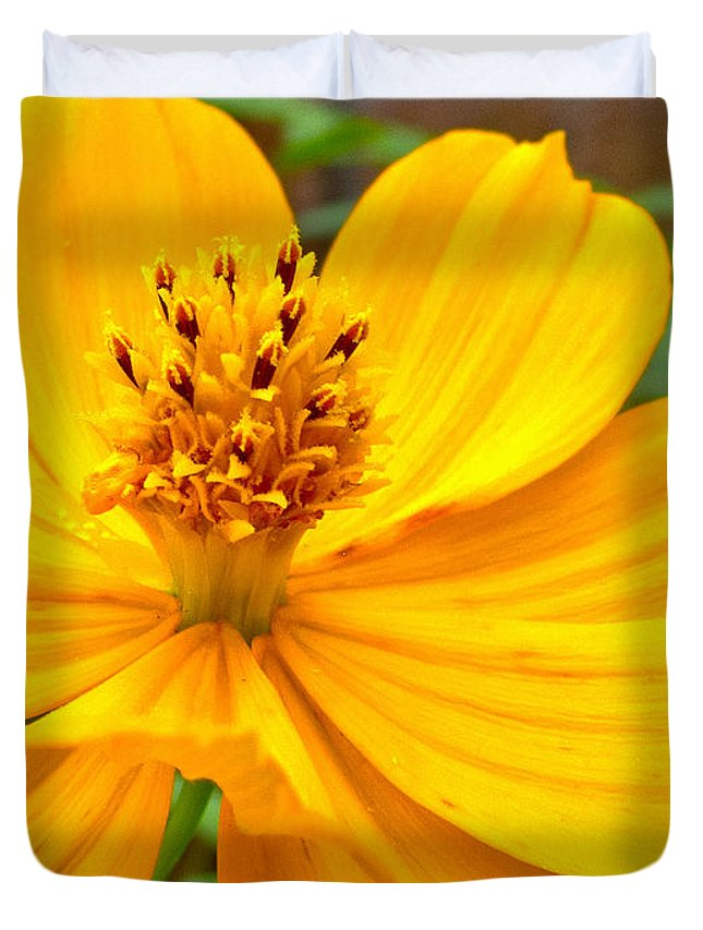 Yellow Flower Duvet Cover featuring the photograph Budding Bouquet by Kelly Holm