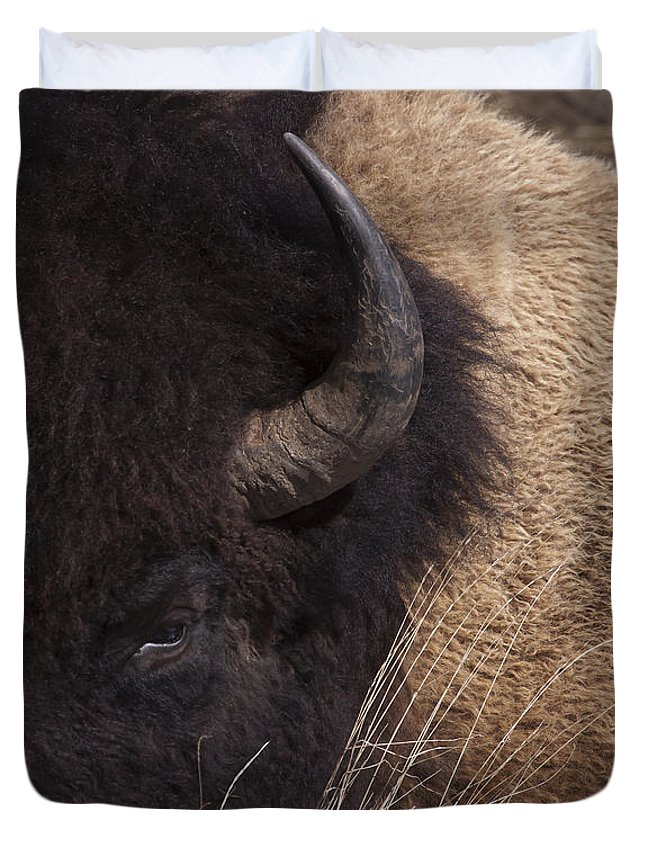 Buffalo Duvet Cover featuring the photograph Buffalo  #0921 by J L Woody Wooden