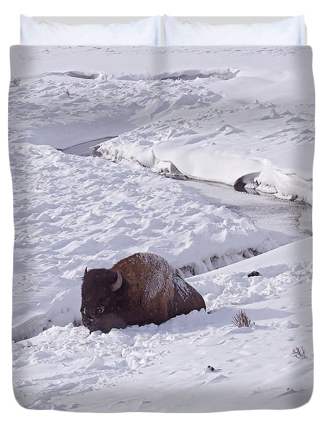 Buffalo Duvet Cover featuring the photograph Buffalo In Snow  #6872 by J L Woody Wooden