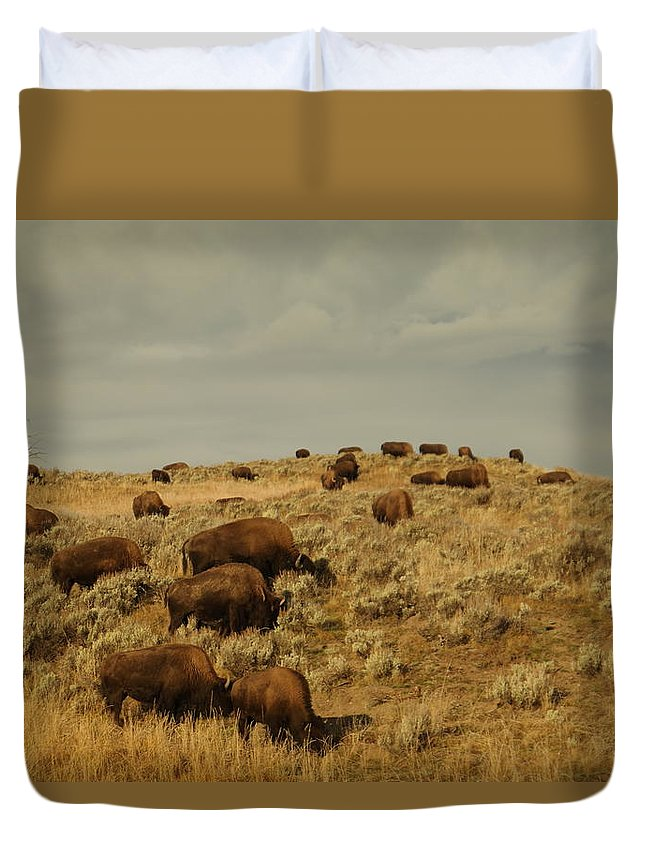 Buffalo Duvet Cover featuring the photograph Buffalo On The Prairie by Jeff Swan