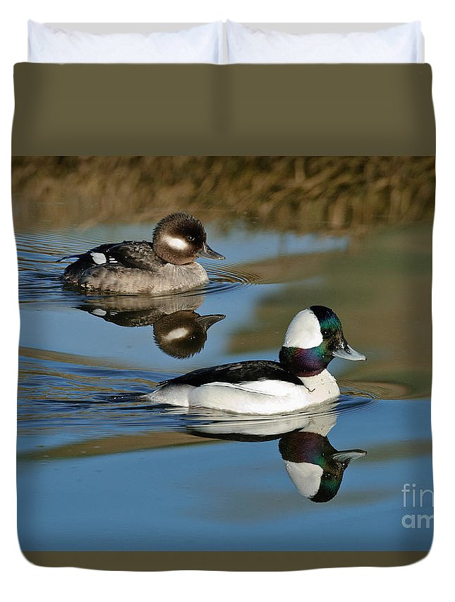 Animal Duvet Cover featuring the photograph Bufflehead Male & Female by Anthony Mercieca
