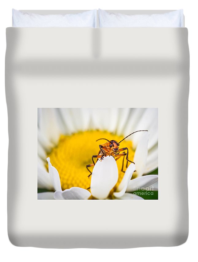 Macro Duvet Cover featuring the photograph Bug On A Daisy by Warrena J Barnerd