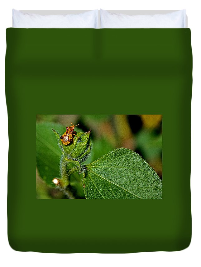 Bug Duvet Cover featuring the photograph Bug On Leaf by David Sanchez