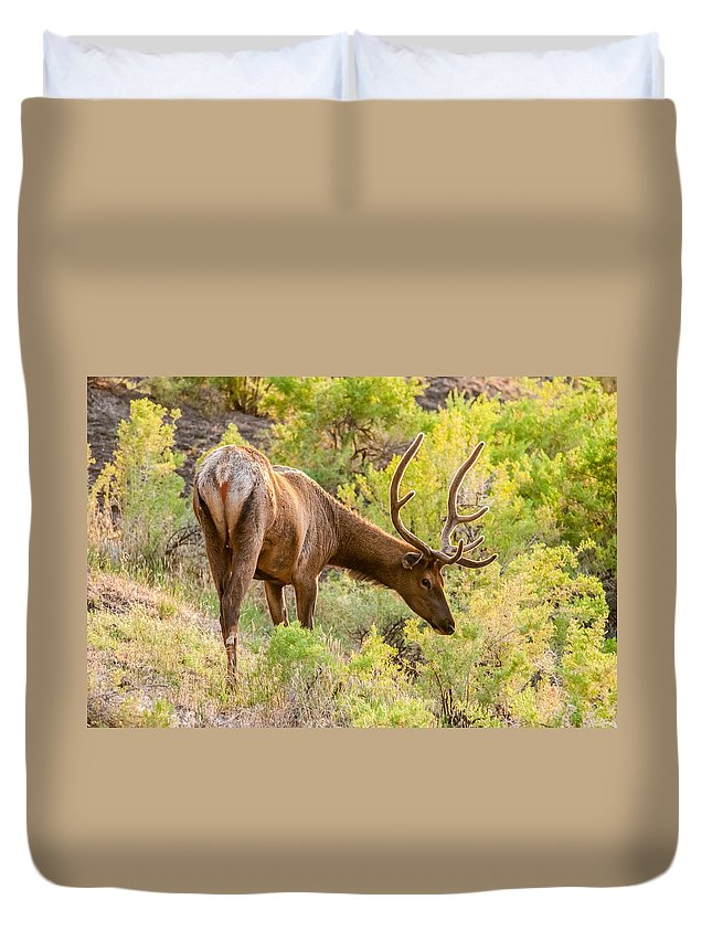 Elk Duvet Cover featuring the photograph Bull Elk Profile by Christopher Nelson