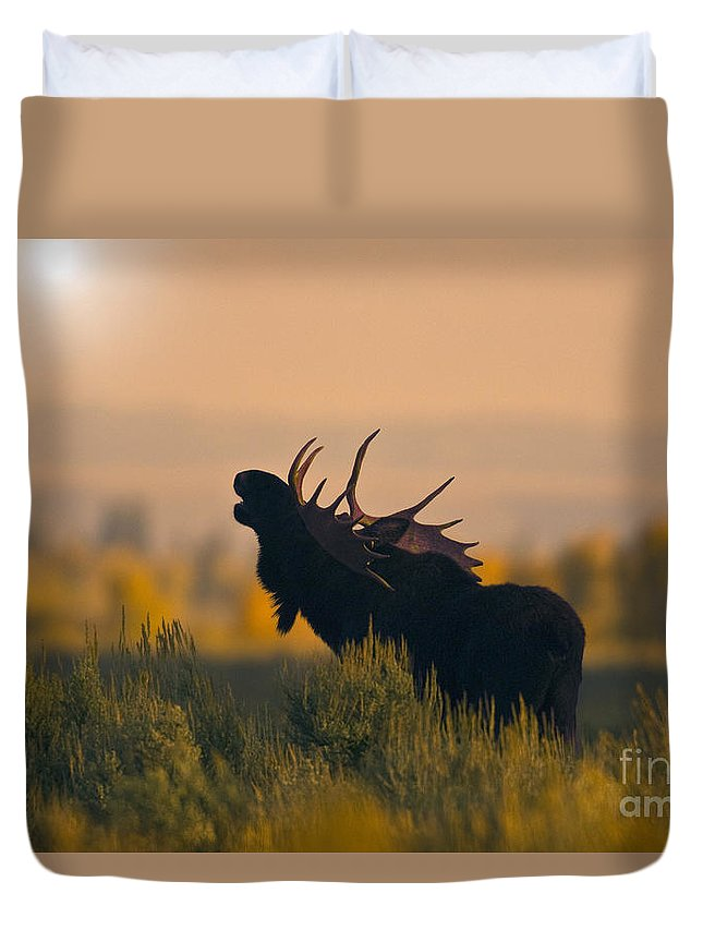 Alces Alces Duvet Cover featuring the photograph Bull Moose Grunting by Anthony Mercieca